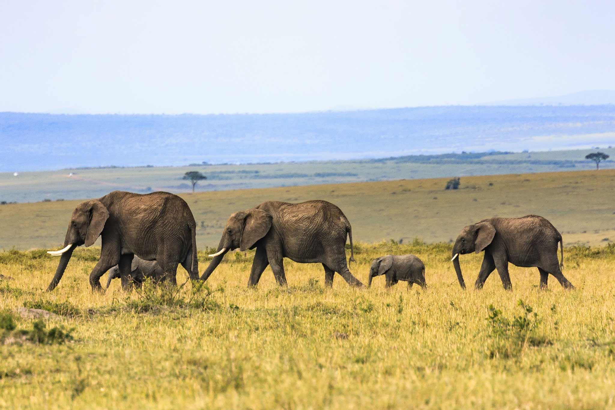 African holiday wildlife